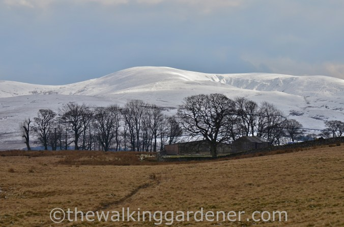 Howgill Fells Coast to Coast