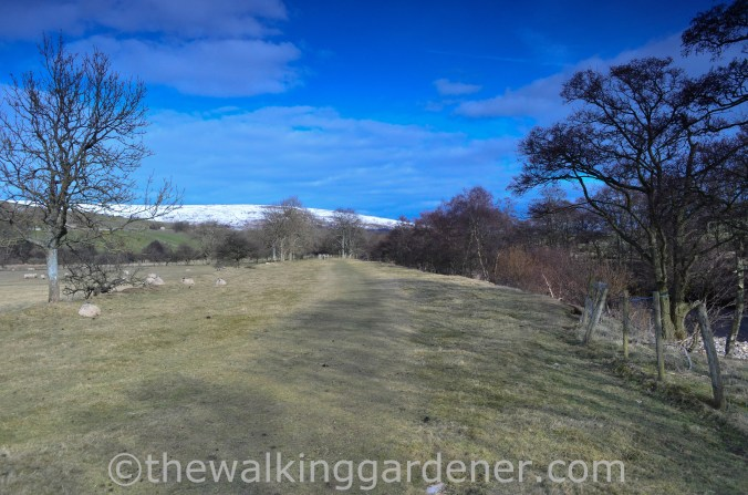 Coast to Coast Keld to Reeth (10)