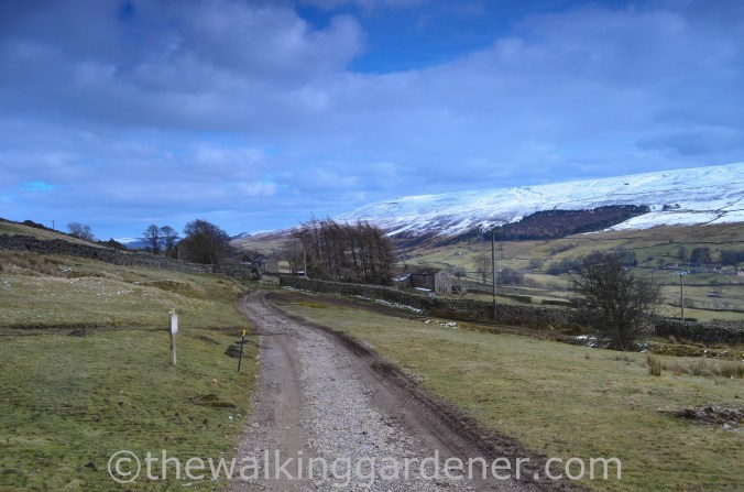 Coast to Coast Keld to Reeth (9)