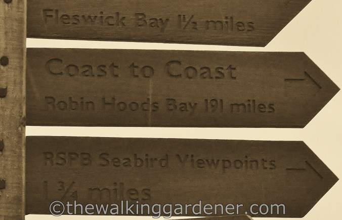 Coast to Coast Signs (11)