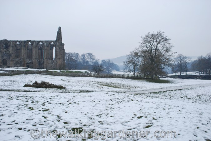 Bolton Priory Dales Way (1)