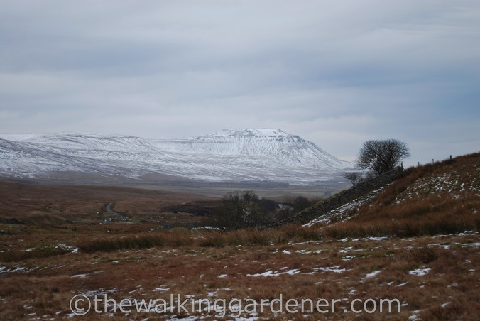 Dales Way Day 4 Ribblehead to Sedbergh (4)