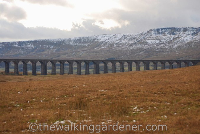 Ribblehead Viaduct (1)