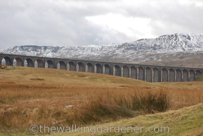 Ribblehead Viaduct (2)