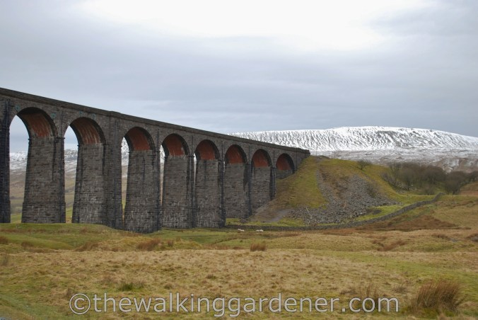 Ribblehead Viaduct Dales Way (2)