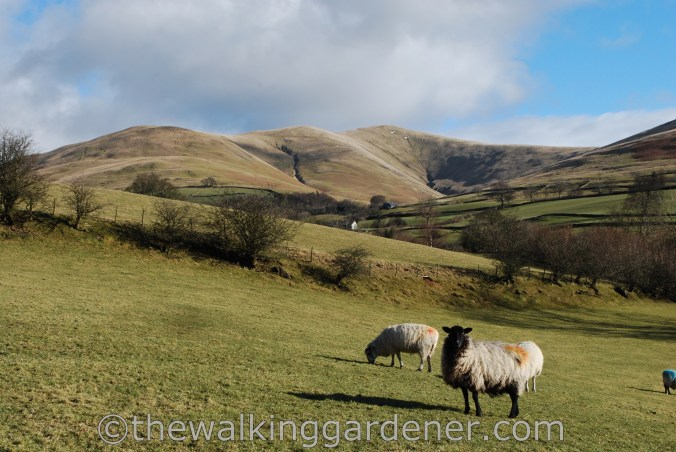 Dales Way Day 5 Sedbergh to Staveley (3)