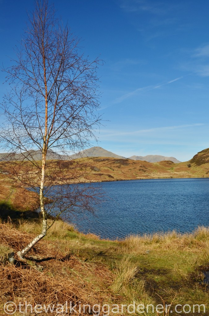Beacon Tarn Cumbria Way (2)