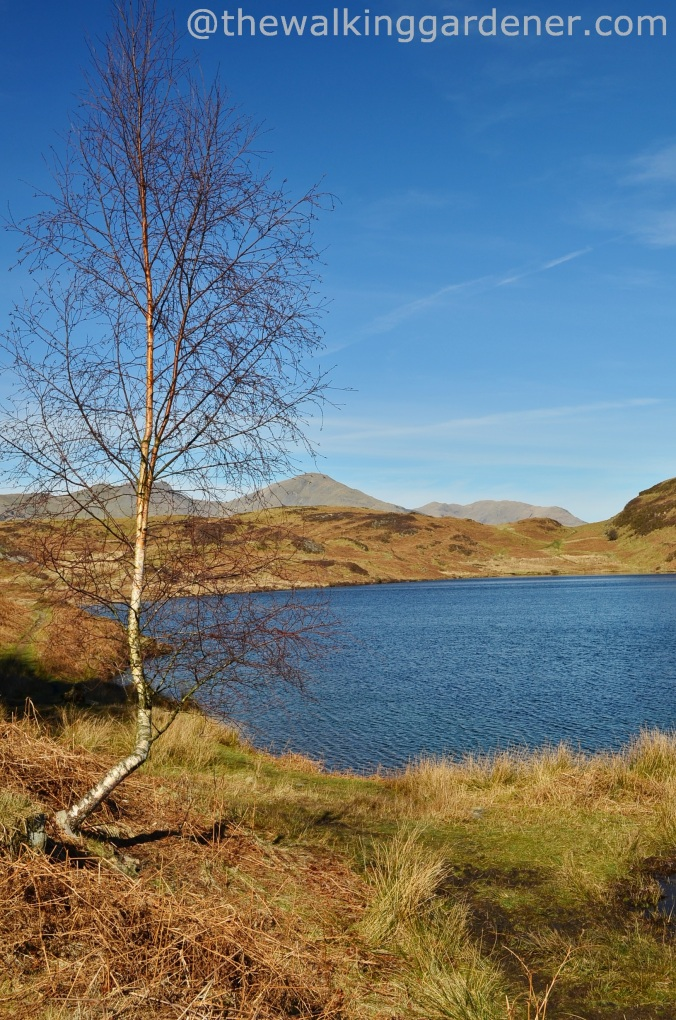 Beacon_Tarn