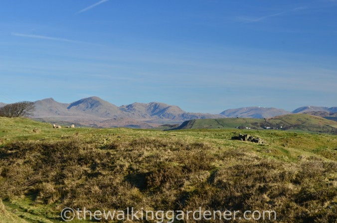 Coniston Fells