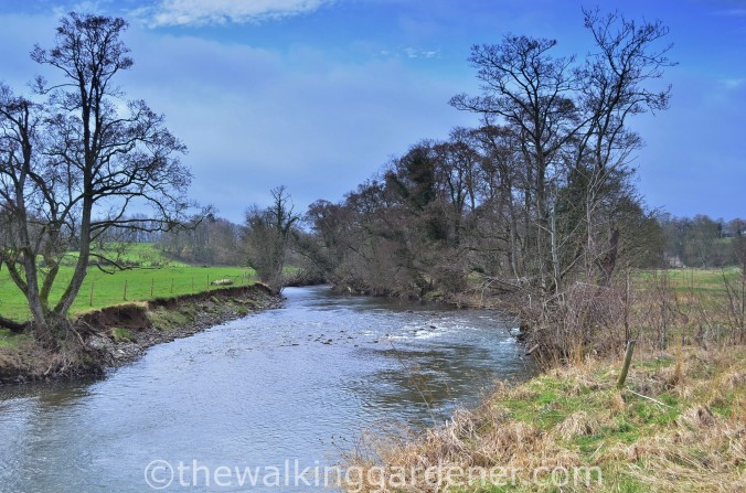 River Caldew Cumbria (3)