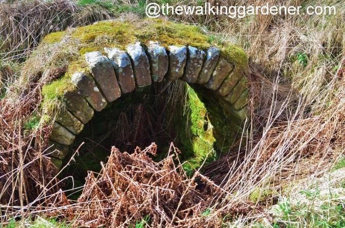 Aesica Arch