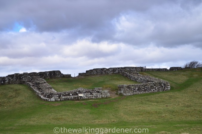 Cawfields Milecastle 42