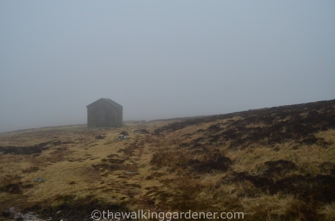 Great Lingy Hut (2)