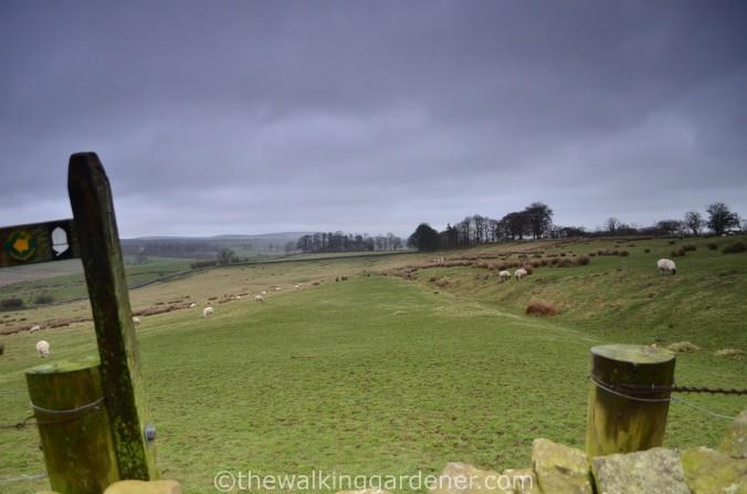 Hadrian Walls Path Carlisle to Gilsland (15)