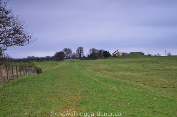 Hadrians Wall Path (6)