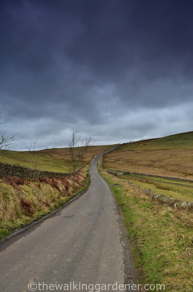 Road to Saughy Rigg