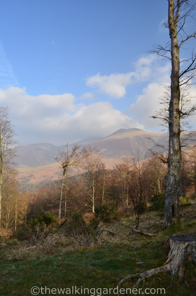 Skiddaw from the Cumbria Way
