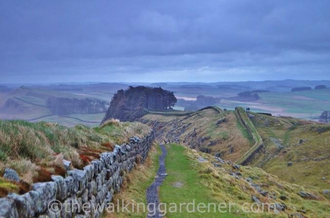 Clayton Wall Hadrian's Wall (2)