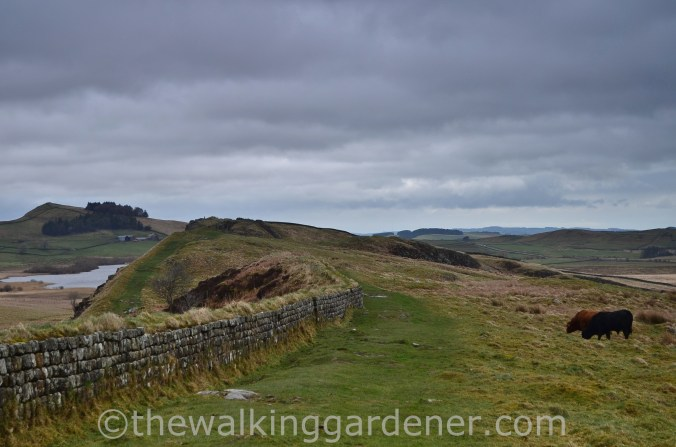 Clayton Wall Hadrian's Wall (4)