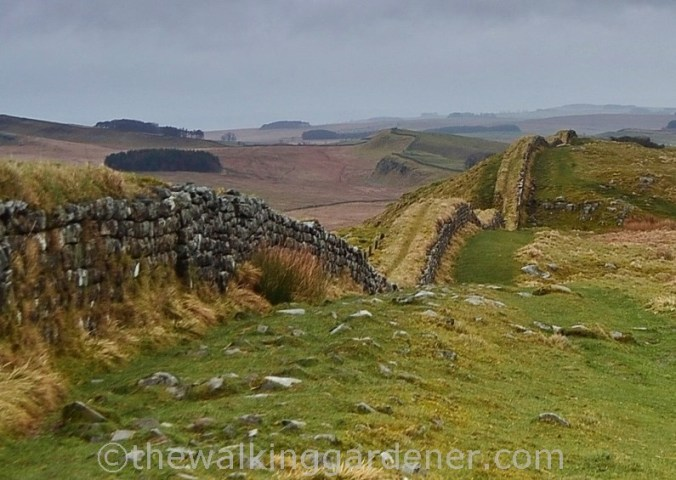 Clayton Wall Hadrian's Wall