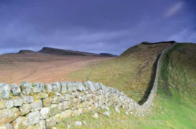 Hadrian's Wall Path Steel Rigg to Wall (4)