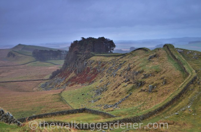Housesteads Crags (1)