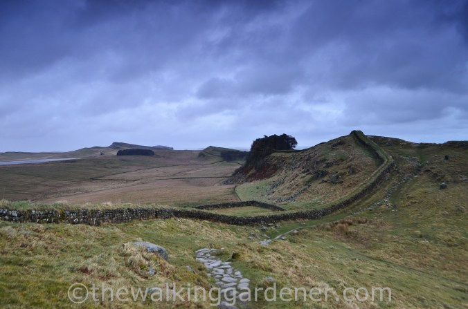 Housesteads Crags (2)