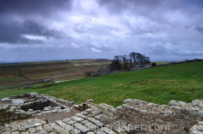 Housesteads Hadrian's Wall (1)