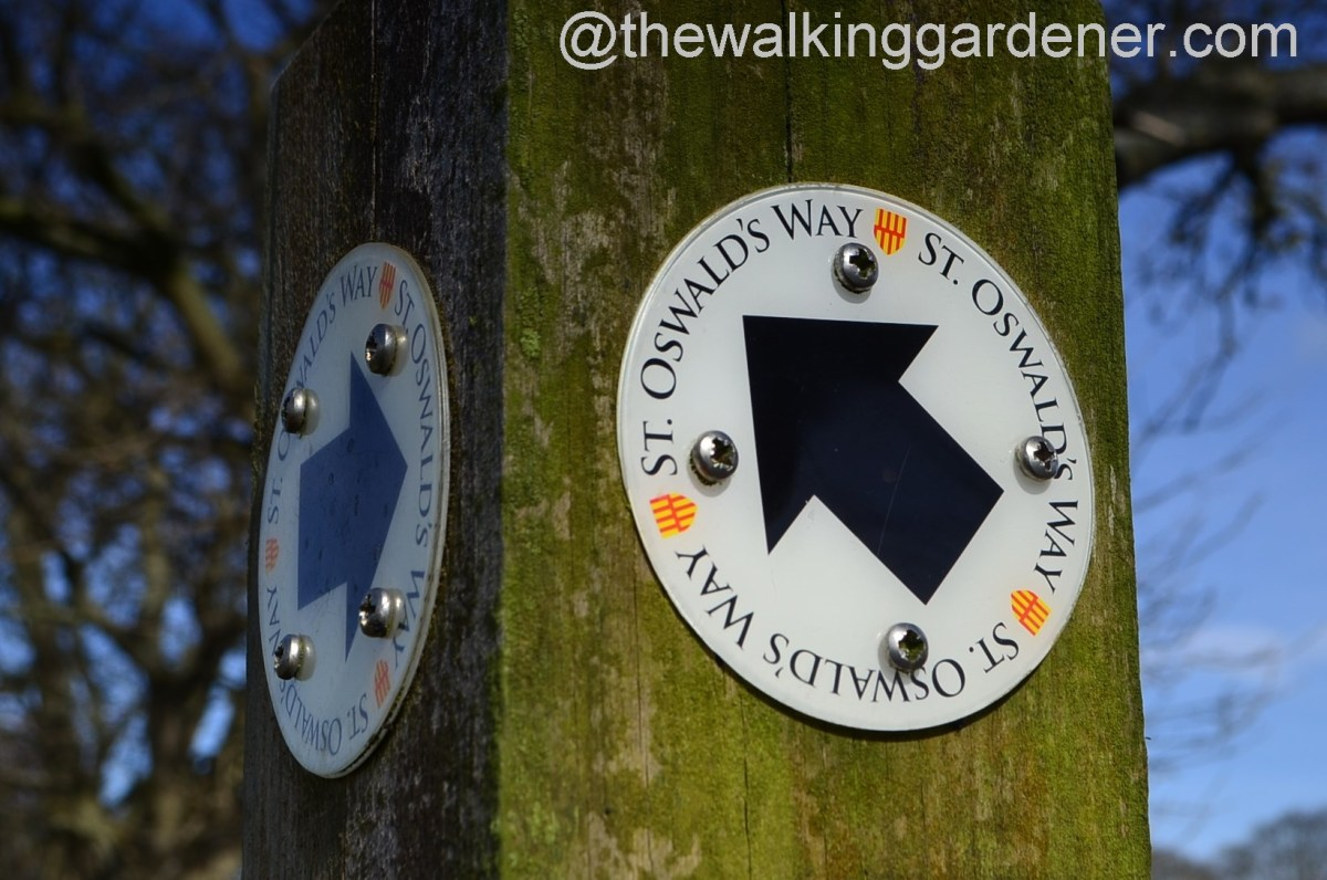 St Oswald's Way 2014