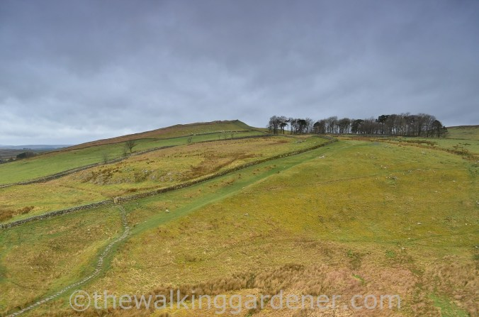 Whinshields Crags (1)