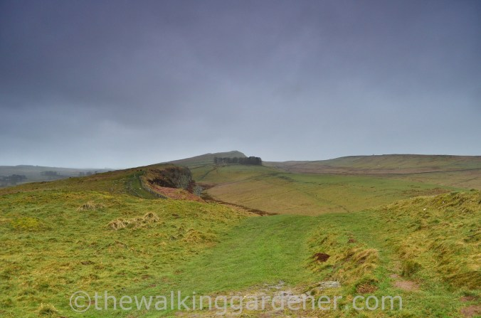 Whinshields Crags (2)