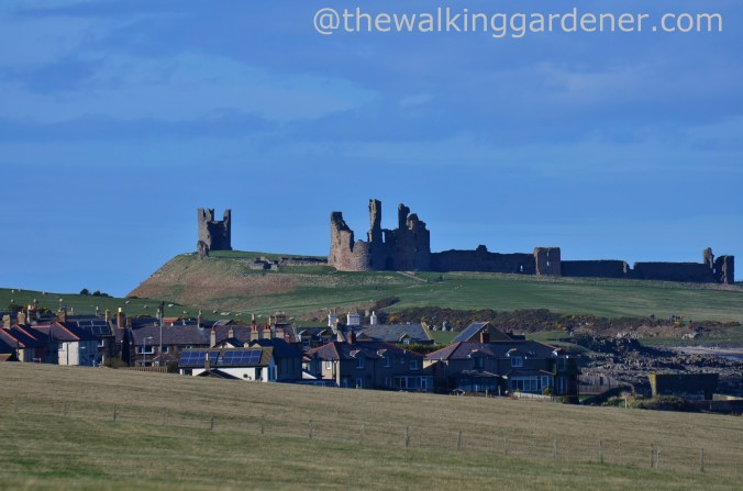 Craster and Dunstanburgh Castle