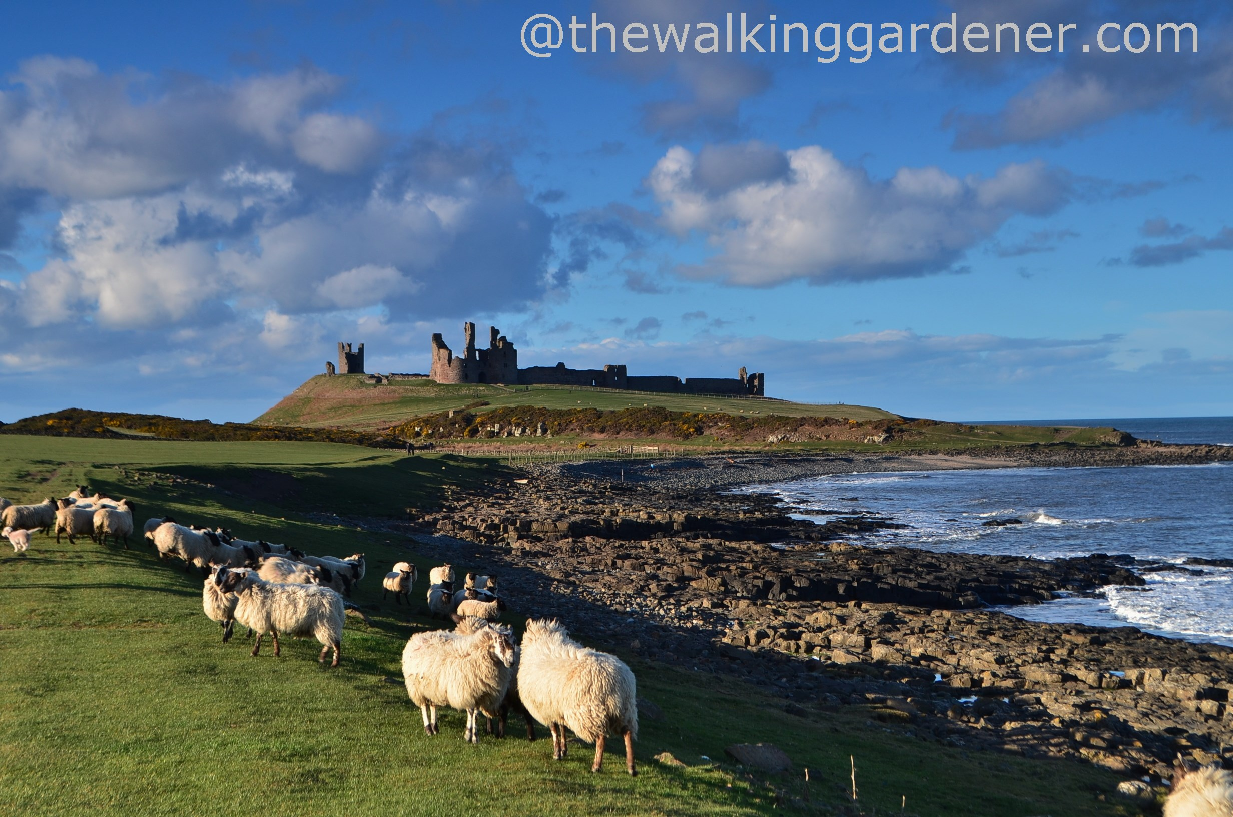 St Oswald's Way: Day 4 – Warkworth to Embleton