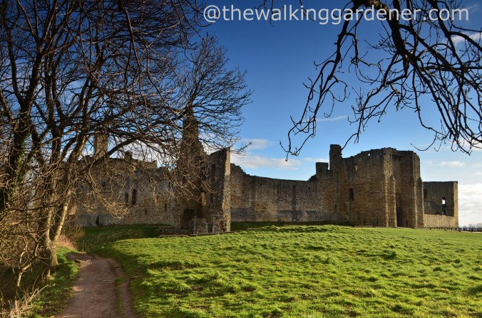 Warkworth Castle (1)