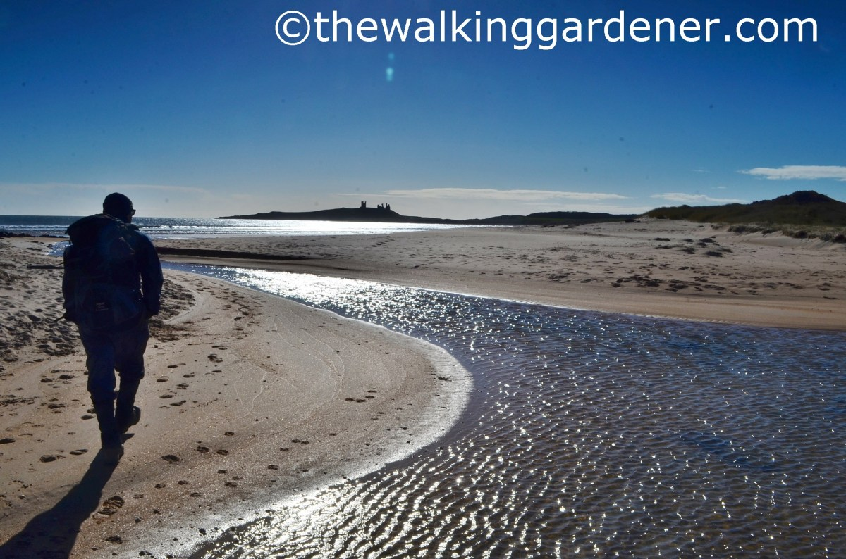 St Oswald's Way: Day 5 - Embleton to Bamburgh