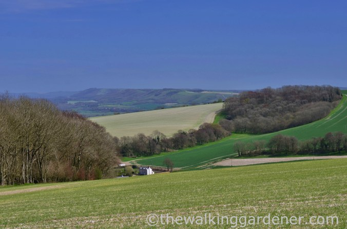 South Downs WAy (2)
