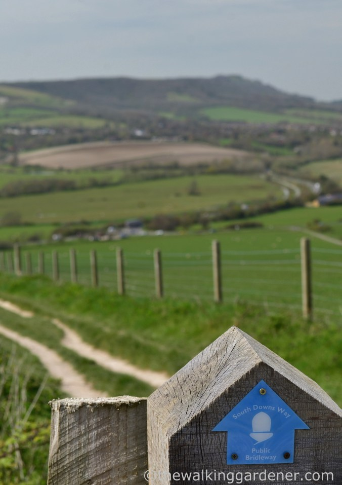 South Downs WAy (3)