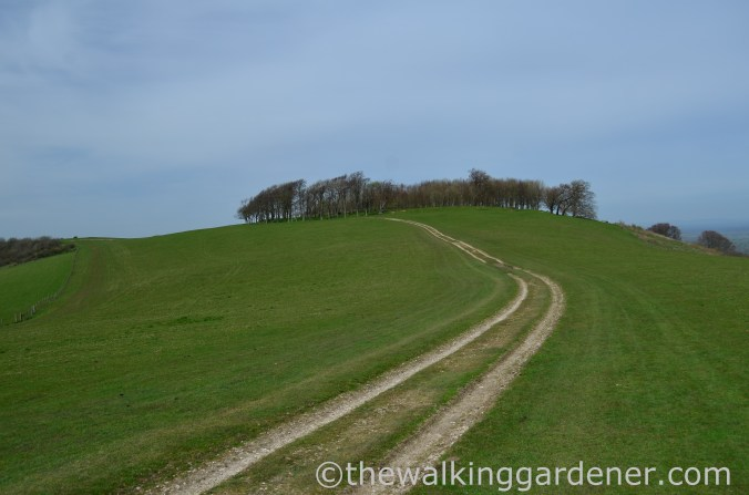 chanctonbury-ring-1