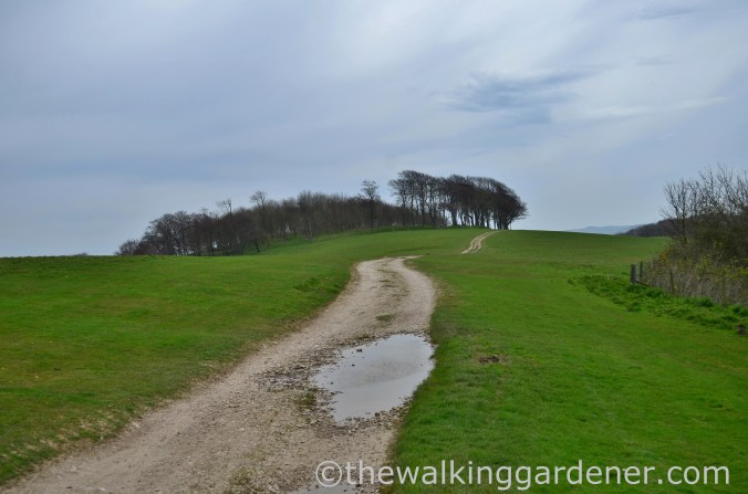 chanctonbury-ring-2
