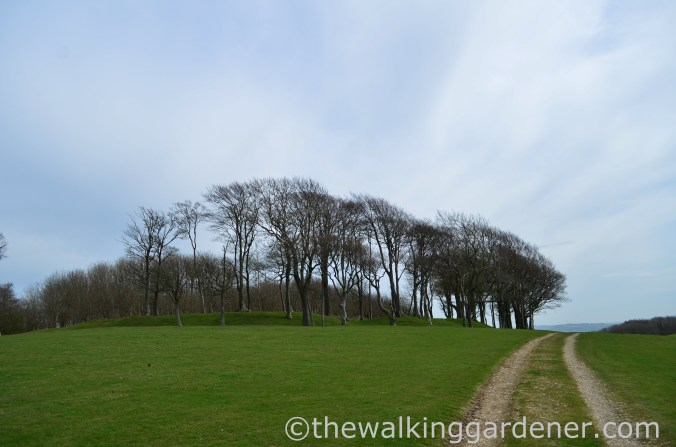 chanctonbury-ring-3