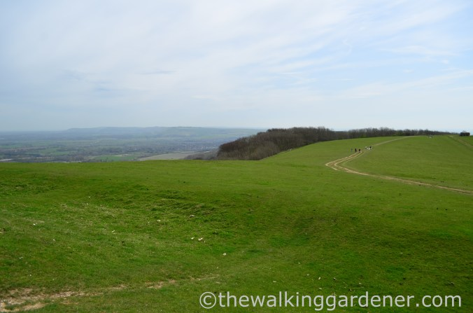 chanctonbury-ring-4