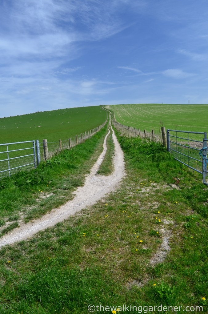 south-downs-way-day-4-14