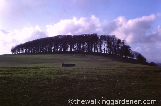 chanctonbury-ring-before-storm