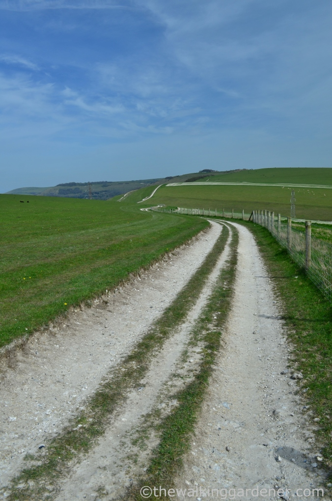 south-downs-way-day-4-19