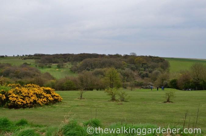 pyecombe-golf-club-1