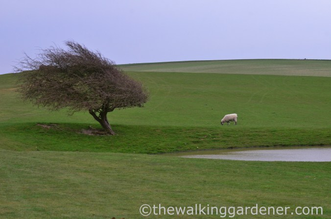pyecombe-to-southease-south-downs-way-10