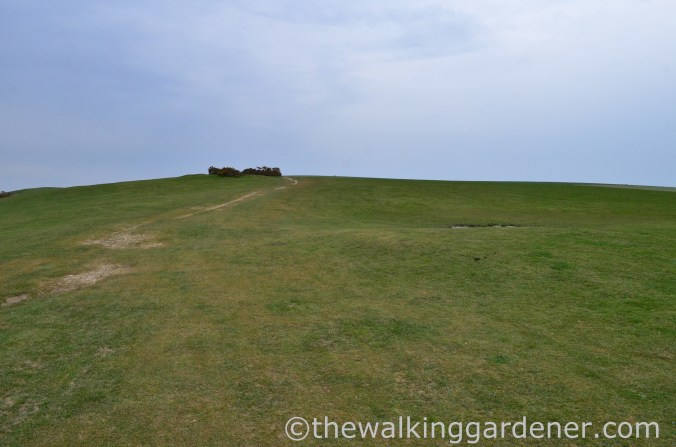 pyecombe-to-southease-south-downs-way-11