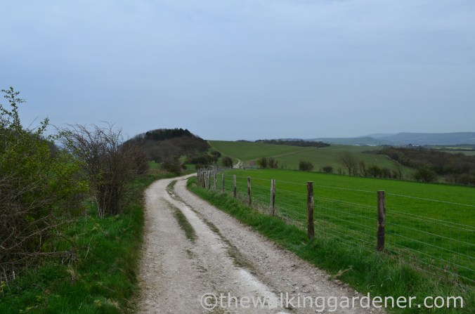 pyecombe-to-southease-south-downs-way-20