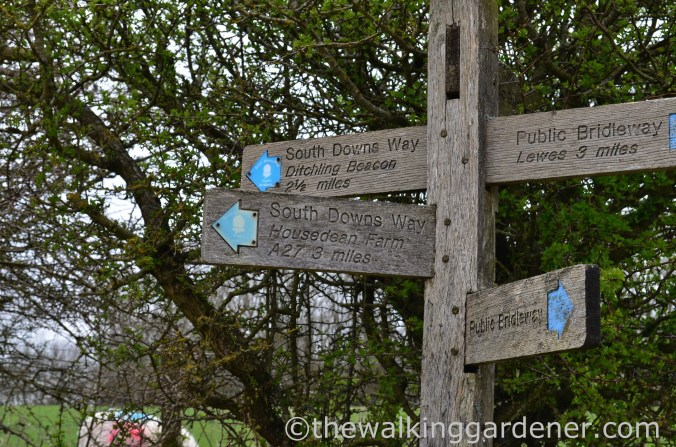 pyecombe-to-southease-south-downs-way-21