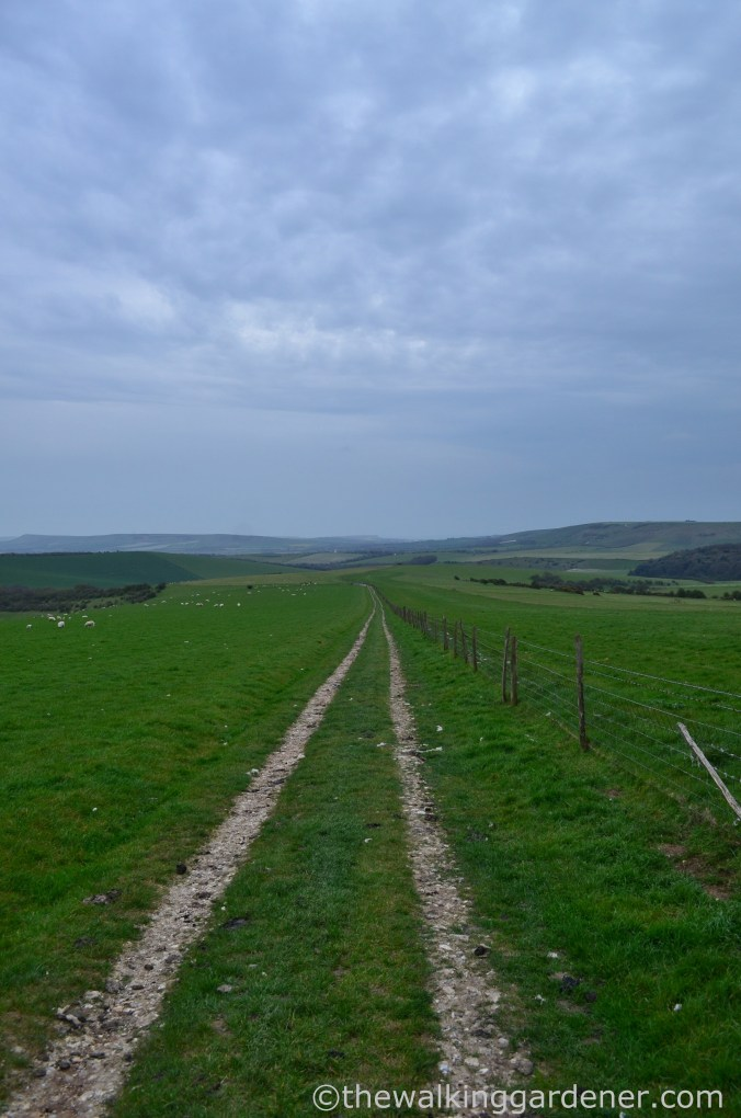 pyecombe-to-southease-south-downs-way-22